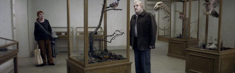 photo-6-un-pigeon-perche-sur-une-branche-philosophait-sur-lexistence